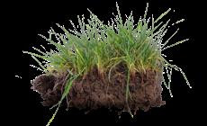 Weicher, nasser Rasen